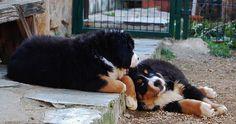 lazy pup days!