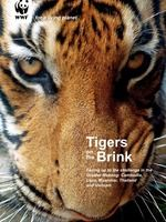 Wild tiger numbers are at an all-time low. We have lost of wild tigers in just over a century. Tigers may be one of the most revered animals, but they are also vulnerable to extinction. As few as exist in the wild today Wild Tiger, Tiger Cub, Tiger Species, Tiger Tails, Epic Pictures, Big Cats, Vulnerability, Cubs, Tigers