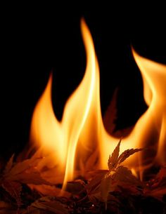 Leaf burning. I haven't smelled this smell since I was little. I remember it so fondly...the scent was heavenly.