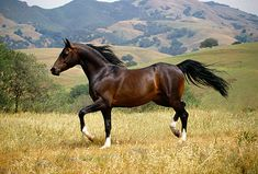 horse trotting - Google Search