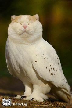 ふくろう=かわいい、猫=かわいい。合体するととにかくやばいことがわかる26枚の画像 : カラパイア