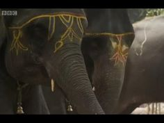 Numbers of working elephants are in decline in India, but elephants remain the top attraction at the incredible Sonepur Mela, India's largest livestock fair. Indian Elephant Art, Dancing Ganesha, Livestock, Elephants, Geography, Bbc, Studios, The Incredibles, Dance