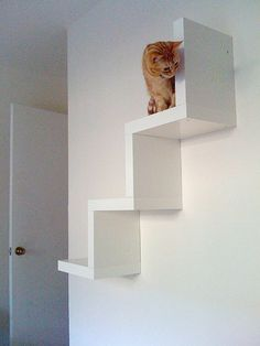 kitty shelves - Outside to get from backyard to top deck where kitty door is! Perfect!