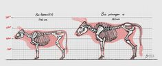 auroch size comparison - Google Search