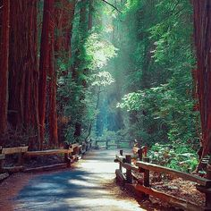 Muir Woods National Monument California photo by @mirajmohsin by fantastic_earth
