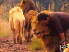 Debora D'Aloisio - Google+ - Kevin Richardson....friend of the lions...♥