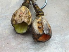 a winters gold urchin pod earrings these measure from tip to tip approx 4.4cm - 1.73 inches sterling silver ear stems the ceramic beads: the