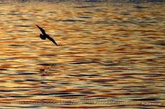 Paisagem Natural/As cores do rio..