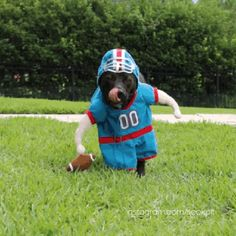 And this dog as a football player. | 24 Halloween Costumes That Will Make You Do A Double Take