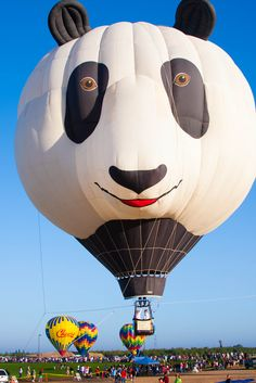 The cute panda hot air balloon ^_^ @ Ripon, California  I crew for the Cheers balloon in the back ground. Flying Balloon, Air Balloon Rides, Hot Air Balloon, Big Balloons, The Balloon, Air Ballon, Cute Panda, Dog Boarding, Cool Pictures