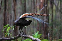 Kinds Of Birds, All Birds, Love Birds, Pretty Birds, Beautiful Birds, Animals Beautiful, Exotic Birds, Colorful Birds, Papua Nova Guiné