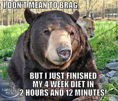The #BLT Baloo #bear
