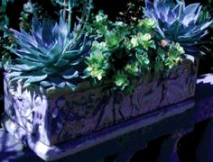 Stone Planter with Succulents Blues and Purples