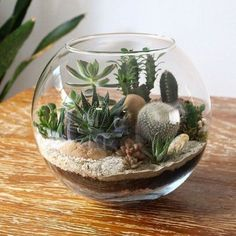 DIY succulent terrarium project at home. Learn how to do it on my website #diy #diyideas #terrarium #succulent #homedecor    Especially in the city there are more and more plots with tiny gardens. When designing such miniature gardens, it is particularly important to structure them clearly and plan them carefully. This makes a small garden an oasis of well-being.    Mini garden plan  Before you start planting, it is important to consid... #Network #Pictures #Succulent #succulents #Terrarium