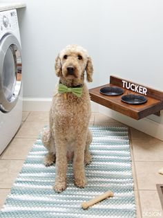 Build a simple wall mounted dog feeder. Make it easy to keep pet area clean. Plans and tips included.