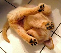Yoga ... puppy style :)