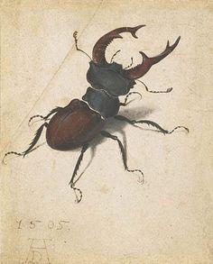 Escarabajo, Alberto Durero