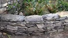 dry stacked field stone wall - YouTube