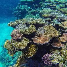 Some of that amazing coral at Flynne Reef on the outer barrier reef. #perfectday #goodtobealive #greatbarrierreef #outerbarrierreef #flynnereef #cairns #silverswift #30mvisibility #beautifulwater #aquamarine #wildlife #nature #photography #goprohero3 #g