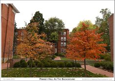 Late October and vibrant colored Autumn leaves on the campus of St. John's College in Annapolis Maryland St Johns College, Annapolis Maryland, Chesapeake Bay, St John's, Autumn Leaves, Photographs, Sidewalk, October, Vibrant