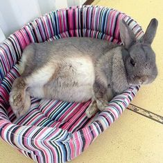If you are searching for a furry friend which is not just extremely cute, but easy to keep, then look no further than a pet bunny. Cute Baby Bunnies, Funny Bunnies, Cute Baby Animals, Funny Animals, Dwarf Bunnies, Bunny Rabbits, Indoor Rabbit, Bunny Care, Tier Fotos