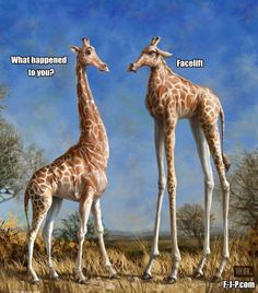 Funny Giraffe Cosmetic Surgery Fail