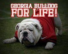 Georgia bulldog for life Georgia Bulldogs Football, Sec Football, College Football Teams, Sports Teams, Kirby Smart, Georgia Girls, Florida Georgia, University Of Georgia, Bull Dog