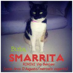 da Corrado Ciavattini   Mercoledì 22 luglio 2015 ho smarrito la mia gattina BIRBA a Rimini in via Bertani (zona Arco d'Augusto/mercato coperto). Se l'hai ritrovata o vista, ti prego di telefonarmi a questo numero: 339.4899456