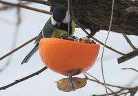 Vogelfutterstelle in Orangenschale
