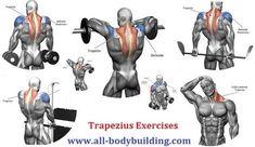 Trapezius Exercises
