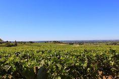 Smaksfryd: RIKTIG GOD JUL TIL ALLE LESERE AV SMAKSFRYD Cabernet Sauvignon, Vineyard, Girly, Outdoor, Women's, Outdoors, Girly Girl, Vine Yard, Vineyard Vines