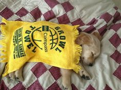 """Andrew Padilla on Twitter: """"Wishing this @Baylor pup a happy #NationalPuppyDay He's just a tad bigger now."""""""
