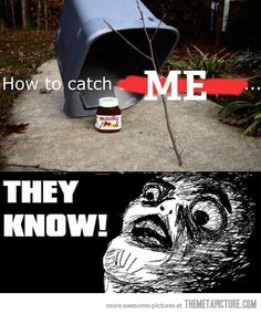 How to catch me (using nutella as bait) with a trap. Nutella Funny, Funny Images, Funny Pictures, The Meta Picture, Fangirl Problems, Just For Laughs, Funny Posts, The Funny, I Laughed