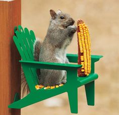 Adirondack Chair Squirrel Feeder---Birds are scary, therefore, I do not support bird feeders. Squirrels are cute, therefore, this is too.