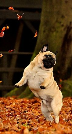 happiness....   Herbstspaziergang #Herbst #autumn #fall #dog