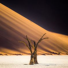 Deadvlei is by far one of the wildest landscapes in the world, the dead trees are such a harsh contrast against the white clay and golden sand. The word surreal doesn't even come close to describing it @namibia_endlesshorizons #sharemynamibia