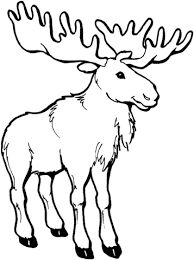 Moose Coloring Pages Select From 24413 Printable Of Cartoons Animals Nature Bible And Many More