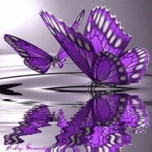 Purple was the color when...a butterfly flew down and then...  back to the sky.....