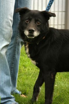"""URGENT!!!! PLEASE RESCUE """"OSCAR""""!!!! Very sweet boy! FOUND IN BECLEY WV...NOW ADOPTABLE!!!! Oscar is trying to be a nice boy! He was picked up  as a stray and brought to the shelter. He is still learning to trust us and is starting to do much better. I think in time he will be wagging his tail in excite! We are working on trying to get him..."""