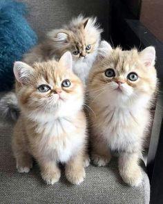 Cute Kittens ❤️