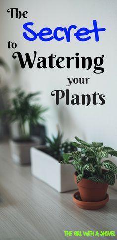 How to Water Houseplants   Watering Plants   Water Indoor Plants  