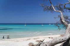 Focus sur la ville de Calvi, dans le nord ouest de la Corse, avec nos meilleures adresses et activités à faire aux alentours.