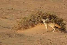 sahara desert - Google Search