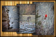 A triptych is a great way to add a balance of 3 to a single photo for one space.  www.tblphotography.com
