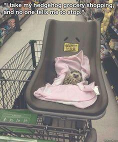 I Take My Hedgehog Shopping...