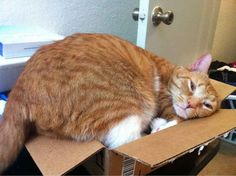 It's time to have an open mind about people, even if they don't always provide the perfect fit. | The Search For Love, As Told By Cats In Boxes