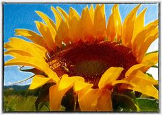 SunflowerPhotographyhome decorWall ArtRomantic by SunspotDesignArt