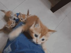 Kitty and the Bean Stalk - Squee daily at these cute animals and the absolute cutest animal pics and gifs ever known to man. Cute Kittens, Cats And Kittens, Cute Funny Animals, Funny Cats, Fun Funny, Funny Humor, Animals And Pets, Baby Animals, Cute Zombie