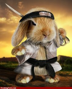 Samurai bunny!