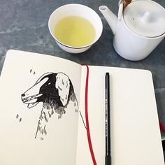 """586 Likes, 4 Comments - Alexandra Cook (@alxndracook) on Instagram: """"Drawing cafe dogs and drinking sencha tea in the nicest settings ✨(thanks @cerealguides ) .…"""""""